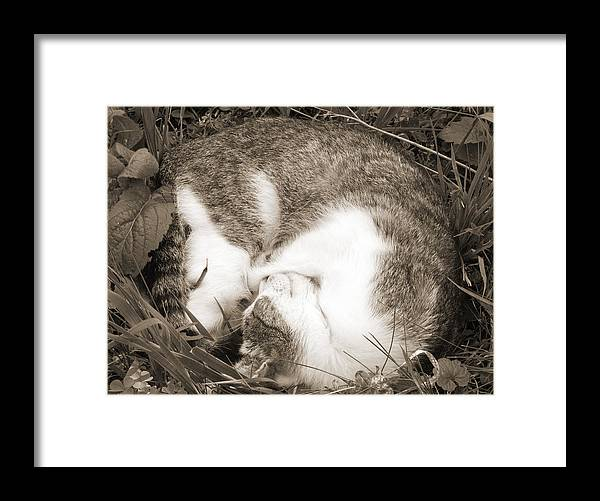 Pets Framed Print featuring the photograph Sleeping by Daniel Csoka