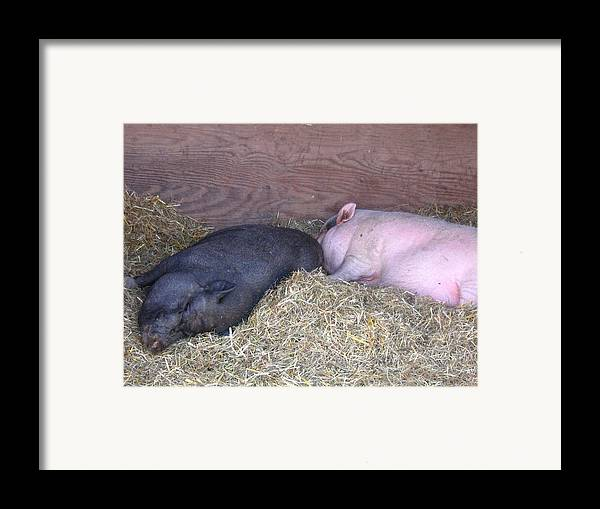 Pig Framed Print featuring the photograph Sleeping Pigs In The Hay by Melissa Parks