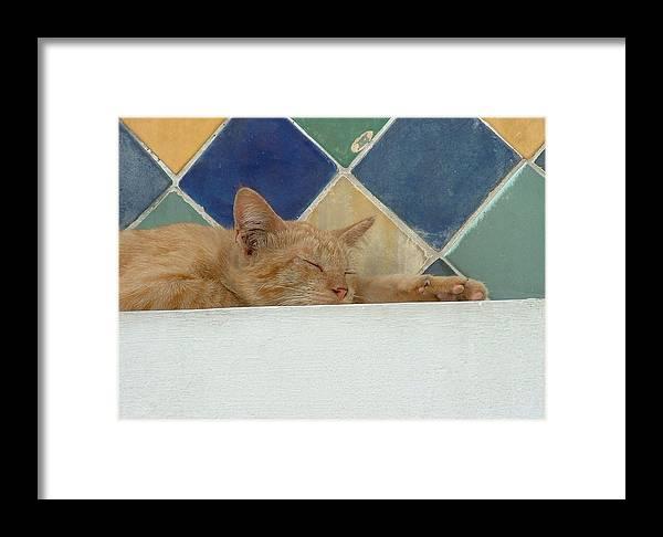 Photography Framed Print featuring the photograph Sleepy by Rika Maja Duevel