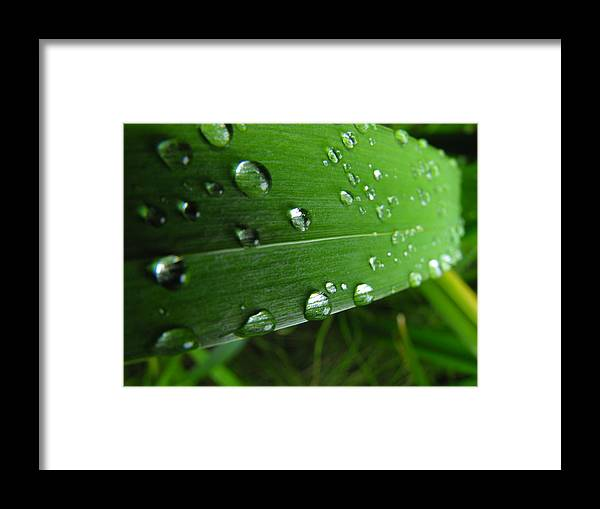 Grass Framed Print featuring the photograph Slide by Marianne Mason
