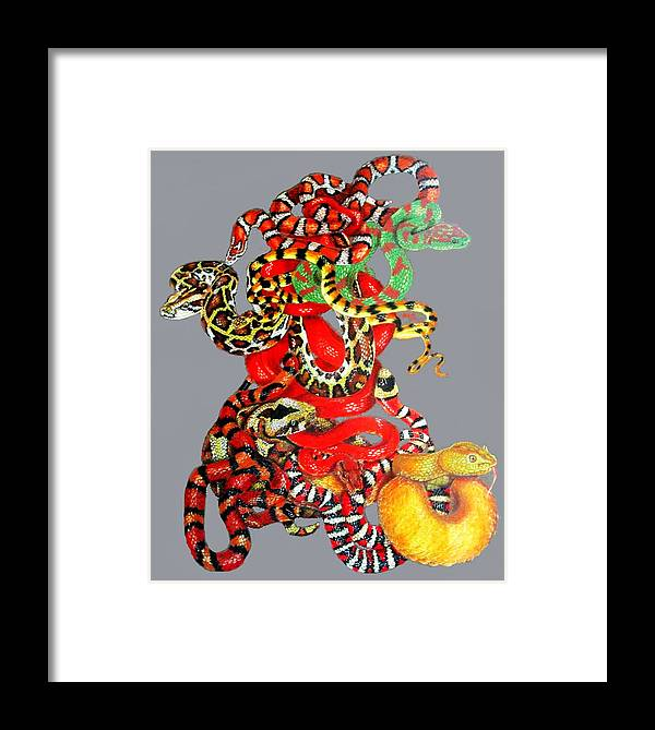 Reptile Framed Print featuring the drawing Slither by Barbara Keith