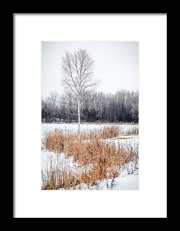 Tree Framed Print featuring the photograph Slithery- Bond by Victor Hiltz