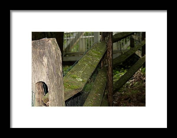 Framed Print featuring the photograph Slow by Jeff Lesher