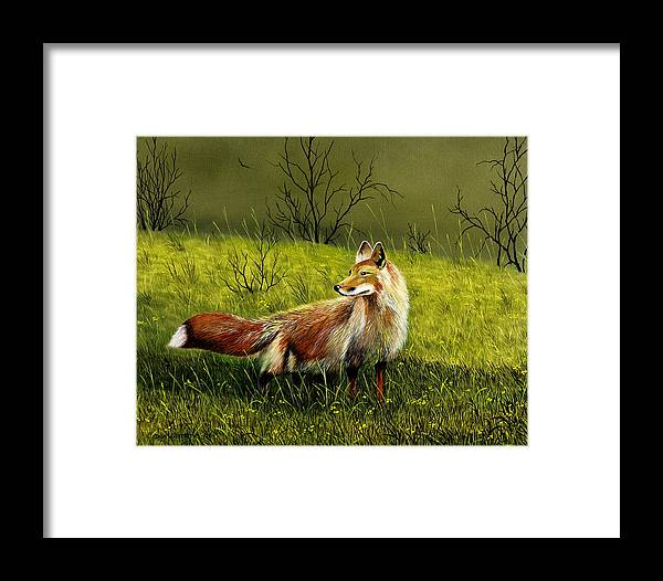 Wildlife Framed Print featuring the painting Sly Fox by Don Griffiths