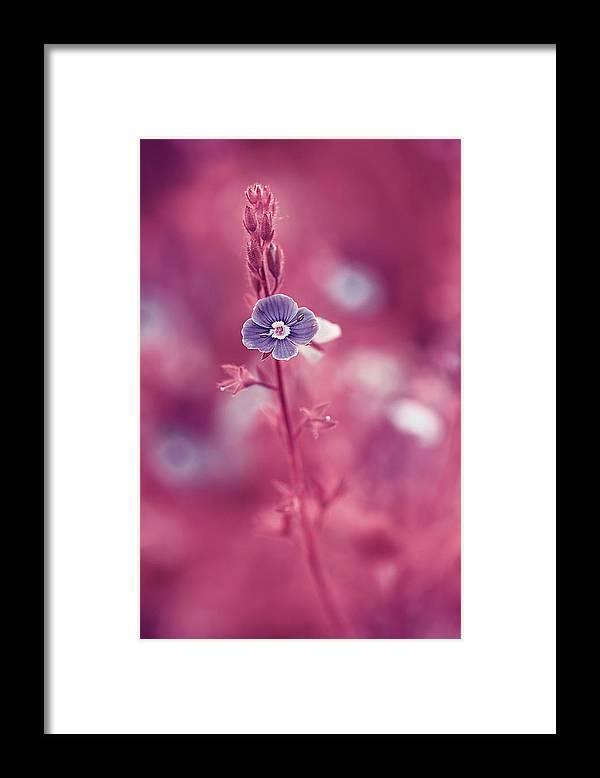 Beautiful Framed Print featuring the photograph Small Romantic Violet Flower by Oksana Ariskina