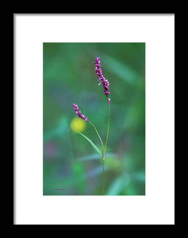 Ron Jones Framed Print featuring the photograph Smart Weed by Ron Jones