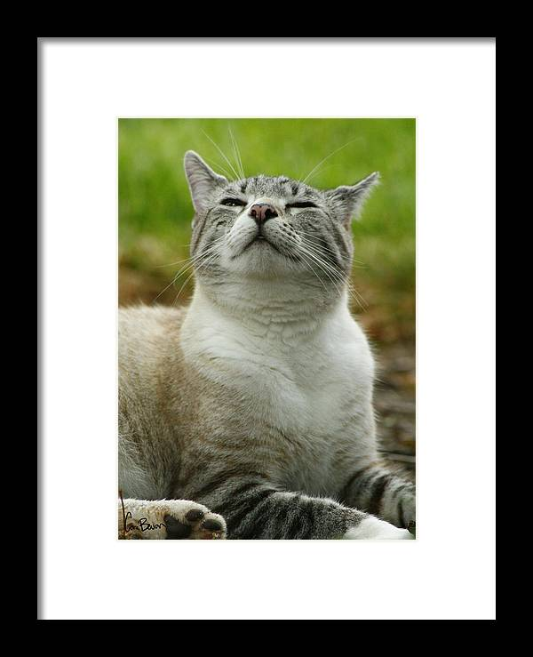 Photo Framed Print featuring the photograph Smells Good by Cara Bevan