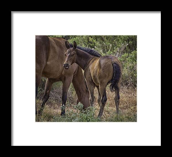 Foal Framed Print featuring the photograph Smile For The Camera by Elizabeth Eldridge