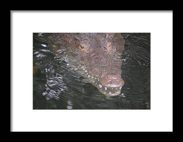 Crocodile Black River Negril Jamaica Framed Print featuring the photograph Smiling Crocodile by Cheryl Burke