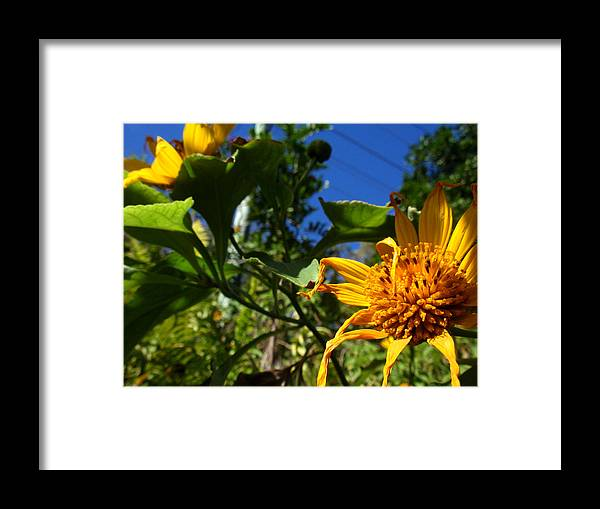 Yellow Framed Print featuring the photograph Smiling Yellow by Edan Chapman