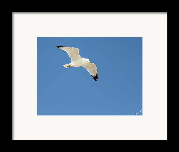 Smooth As Silk Framed Print featuring the photograph Smooth As Silk by Ed Smith