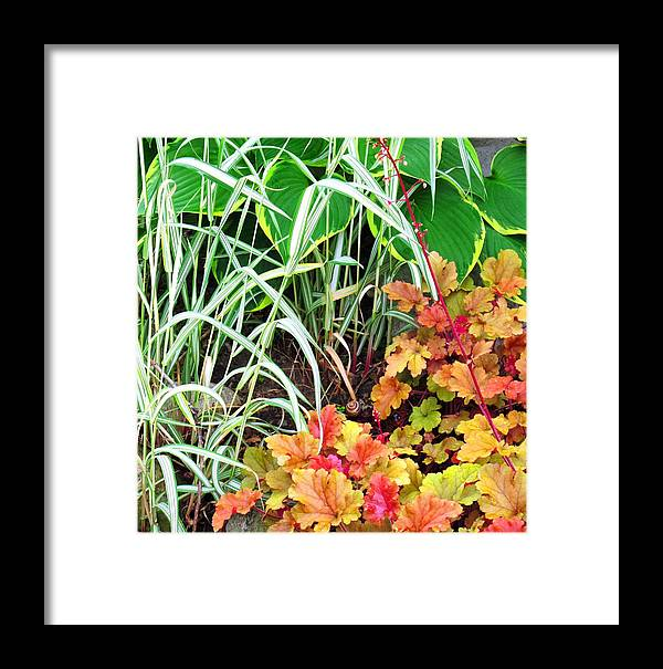 Garden Framed Print featuring the photograph Snail In A Rich Composition by Ian MacDonald