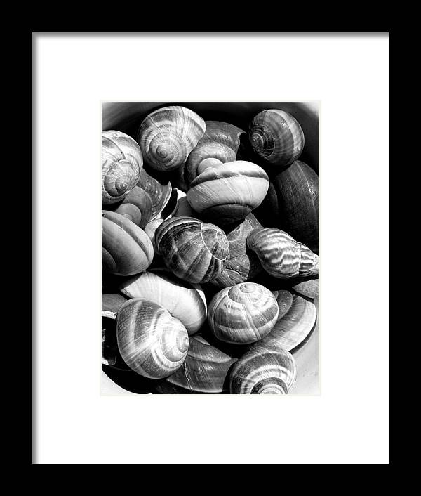 Shells Framed Print featuring the photograph Snail Shells In Black And White by Anselmo Albert Torres