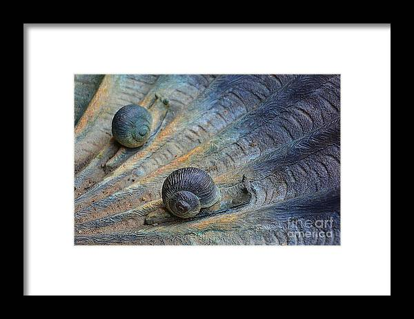 Sculpture Framed Print featuring the photograph Snail's Pace by Cindy Manero