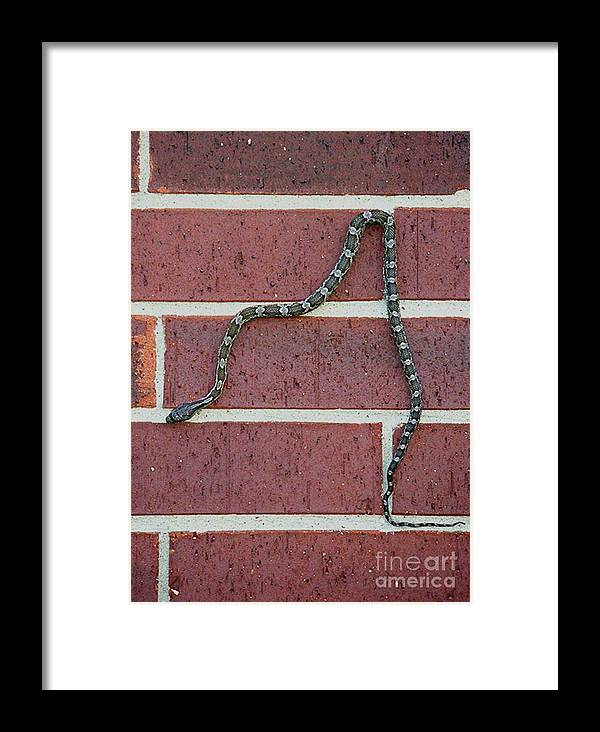 Nature Framed Print featuring the photograph Snaking Down A Brick Wall by Lucyna A M Green