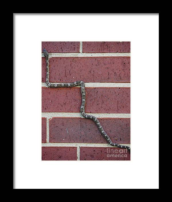 Nature Framed Print featuring the photograph Snaking Up A Brick Wall by Lucyna A M Green