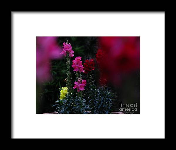 Art For The Wall...patzer Photography Framed Print featuring the photograph Snapdragon by Greg Patzer