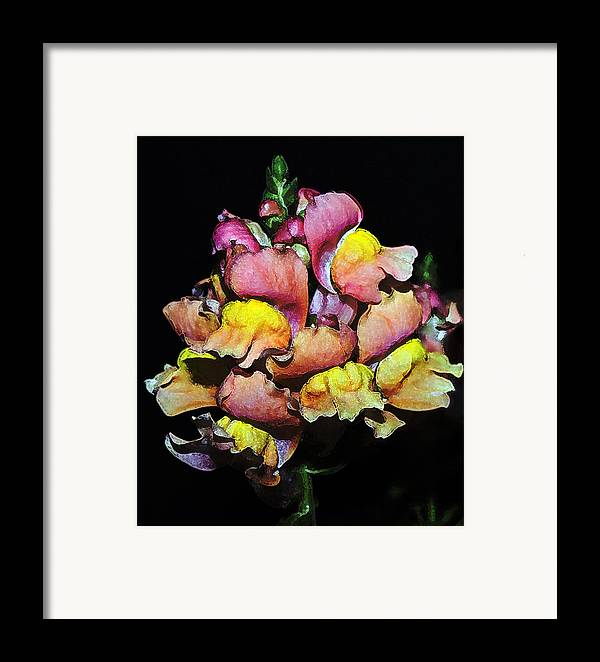 Snapdragon Framed Print featuring the photograph Snapdragons by Al Mueller