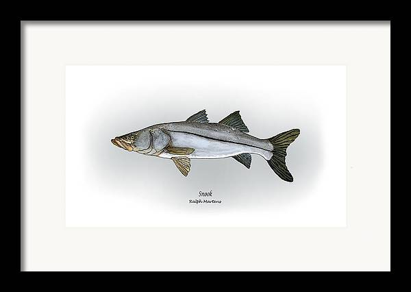 Snook Framed Print featuring the painting Snook by Ralph Martens