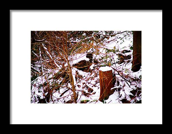 Winter Framed Print featuring the photograph Snow And Tree Trunk by Paul Kloschinsky