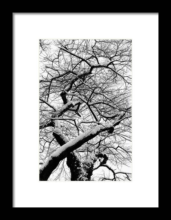 Snow Framed Print featuring the photograph Snow And Trees 2 by Robert Ullmann