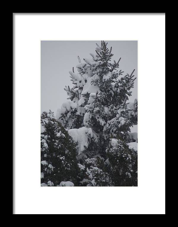 Snow Framed Print featuring the photograph Snow Covered Pine by Heather Green