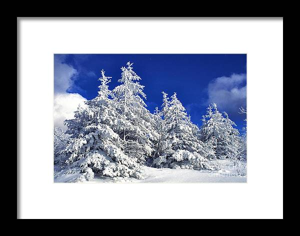 West Virginia Framed Print featuring the photograph Snow-covered Pine Trees by Thomas R Fletcher