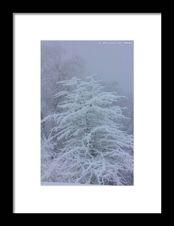 Snow Framed Print featuring the photograph Snow Covered Tree in the Fog by Carolyn Postelwait