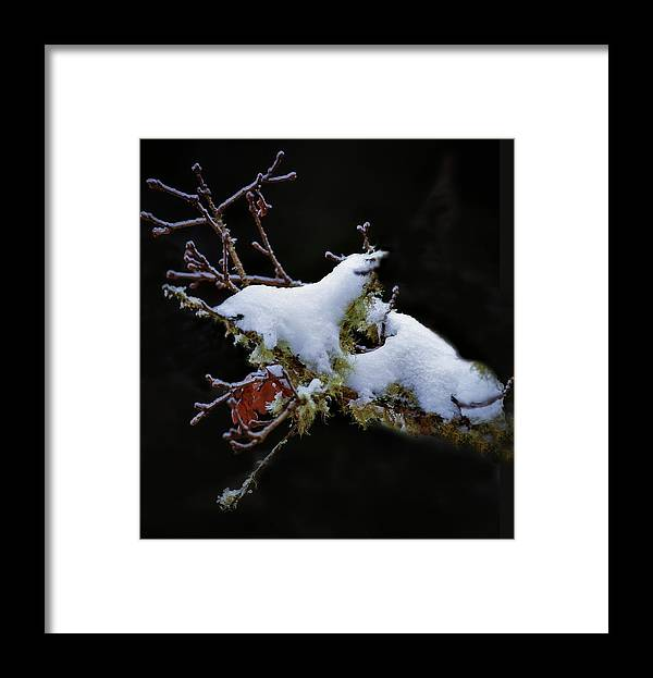 Snow Framed Print featuring the photograph Snow Creatures by John Christopher