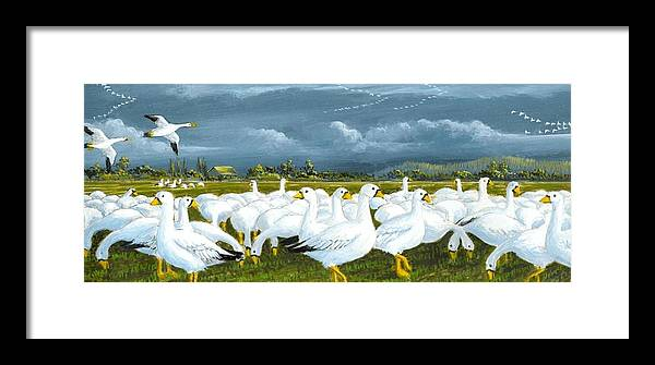 Geese Framed Print featuring the painting Snow Geese Gathering by Bob Patterson