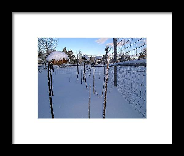 Snow Winter Nature Natural Bend Portland Oregon White Framed Print featuring the photograph Snow In Bend Oregon by Christopher Allison