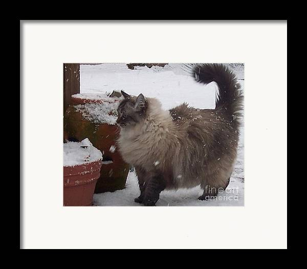 Cats Framed Print featuring the photograph Snow Kitty by Debbi Granruth