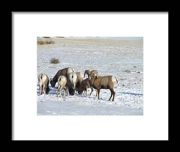 Wildlife Framed Print featuring the photograph Snow On The Hills by Dennis Wilkins