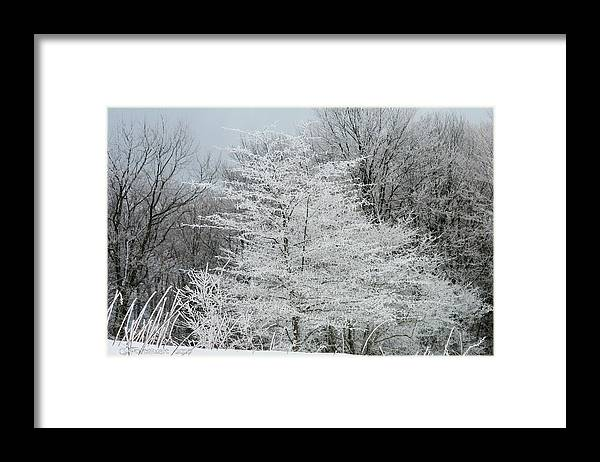 Snow Framed Print featuring the photograph Snow Tree by Carolyn Postelwait