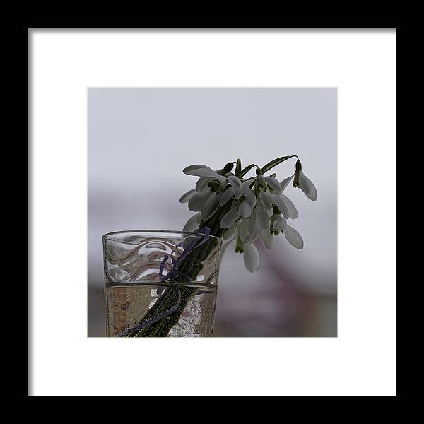 Arrangement Framed Print featuring the photograph Snowdrops Bouquet In The Glass by Adrian Bud