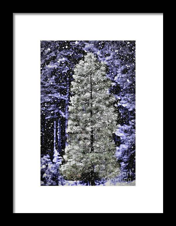 Pine Tree Framed Print featuring the photograph Snowy Day Pine Tree by Jim And Emily Bush