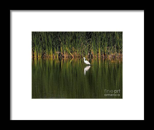Animals Framed Print featuring the digital art Snowy Egret In Marsh Reinterpreted by Wingsdomain Art and Photography