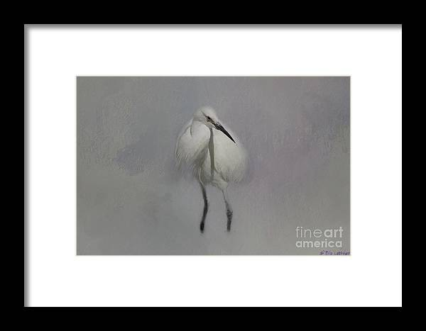 Snowy Egret Framed Print featuring the mixed media Snowy Elegance by Eva Lechner