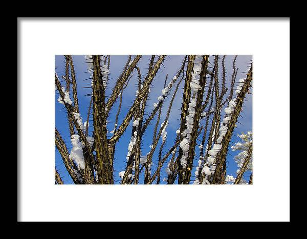 Framed Print featuring the photograph Snowy Ocotillo Sky by Eric Rosenwald