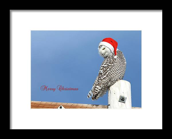 Snowy Owl Framed Print featuring the photograph Snowy Owl Christmas Card by Everet Regal