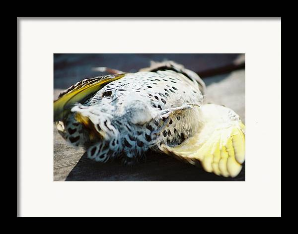 Death Framed Print featuring the photograph Snuffed Out And Eaten by Jennifer Trone