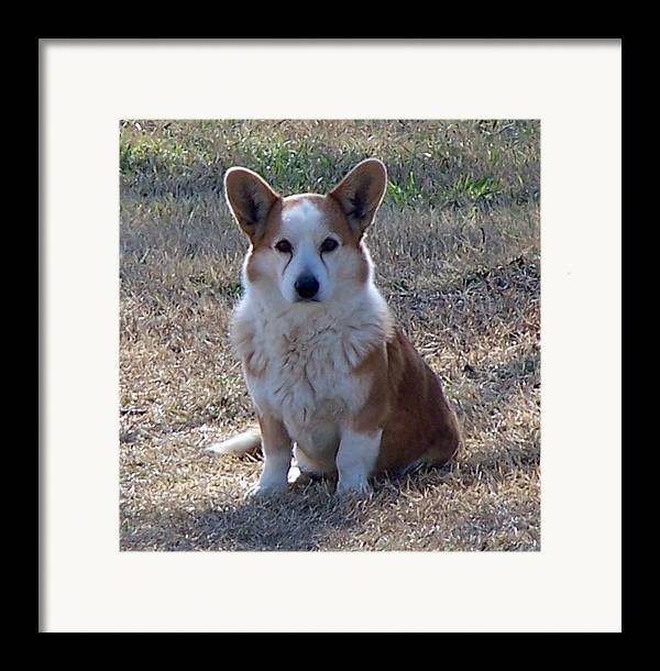 Pets Framed Print featuring the photograph So Handsome by Lilly King