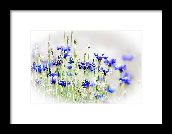 Susaneileenevans Framed Print featuring the photograph So Many Flowers, So Little Time by Susan Eileen Evans