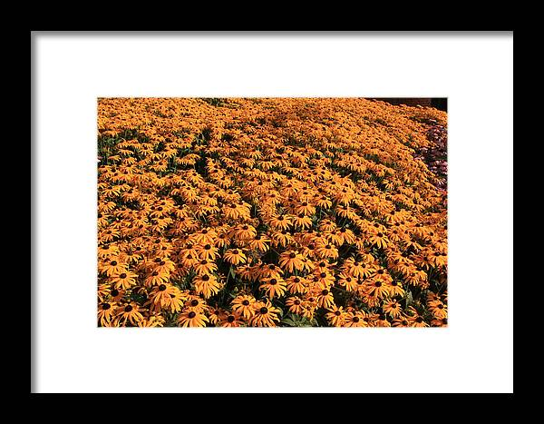 Flower Framed Print featuring the photograph So Many Flowers To Pick From........ by Lewis Journeyman