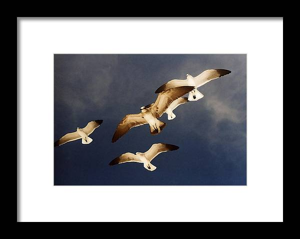 Seagulls Framed Print featuring the digital art Soar by Ginger Howland