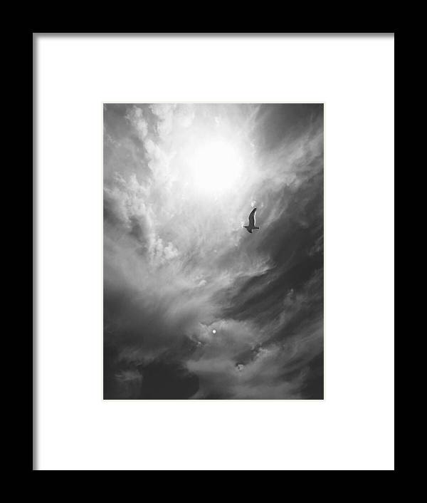 Bird Framed Print featuring the photograph Soaring Alone by Aria Saint Jean