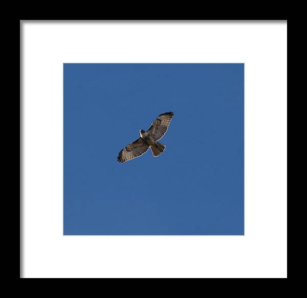 Large Framed Print featuring the photograph Soaring High by Teresa Stallings