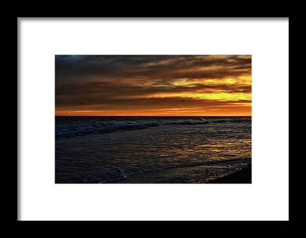 Atlantic Framed Print featuring the photograph Soaring In The Sunset by Kelly Reber