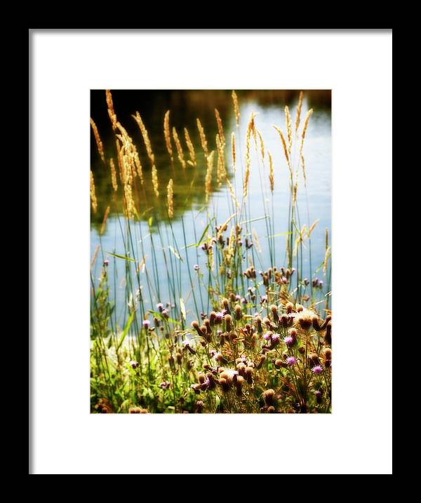 Soft Framed Print featuring the photograph Soft and Surreal by Marilyn Hunt