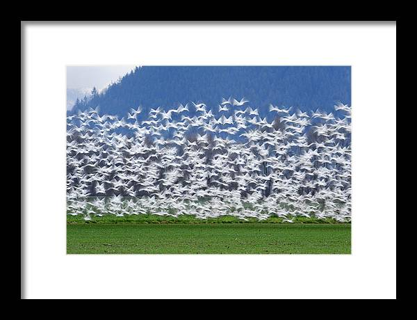 Wildlife Framed Print featuring the photograph Soft Frock L525 by Yoshiki Nakamura